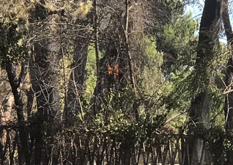 Pescara, a caccia di selfie nella pineta bruciata: accendono un altro fuoco