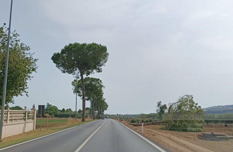 Corropoli, ripreso il taglio degli alberi sulla 259 FOTO