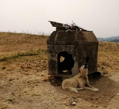 Alanno, cani legati alla catena e denutriti: denunciato il proprietario