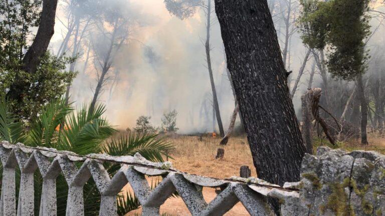 Pescara, ripartito l'incendio nella pineta dannunziana VIDEO-FOTO