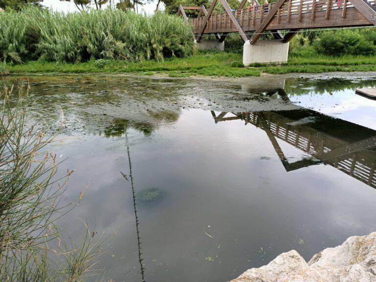 Foce del Vibrata, via i pesci morti (che saranno analizzati). In attesa dei campionamenti