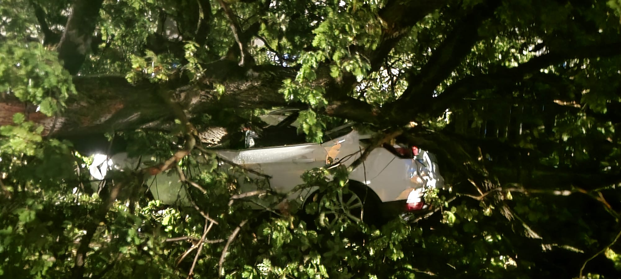 Pineto, grossa quercia cade a Borgo Santa Maria: danneggiate tre auto FOTO