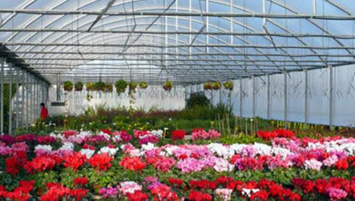 Florovivaismo, produzione in calo del 10% in Abruzzo