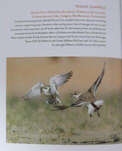 Giulianova, foto attivisti dell'Oasi del Fratino e della Camomilla di mare pubblicate sul libro 'Bird Photographer of the Year 2021'