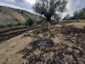 Atri, brucia potatura e fa partire incendio: denunciato FOTO