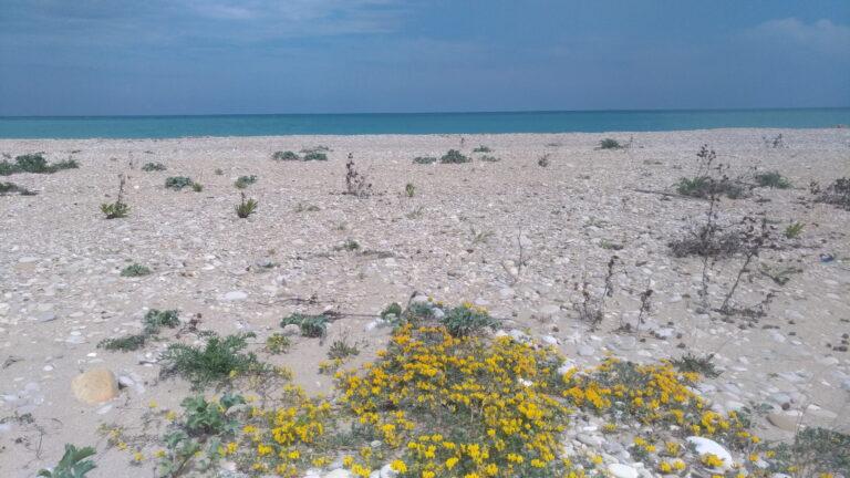 Pineto, scoperte piante rare sul litorale tra Scerne e Villa Fumosa