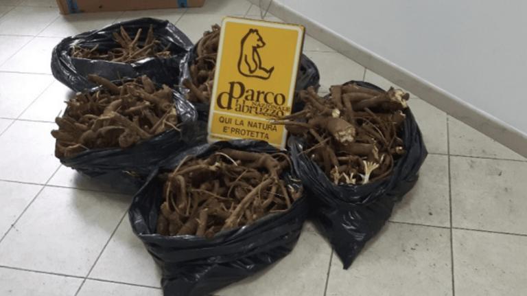 Beccati con 50 chili di genziana appena raccolta nel Parco nazionale FOTO