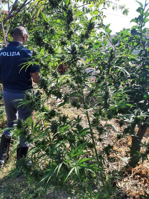 Cologna Spiaggia, cannabis coltivata nel terreno: blitz della polizia