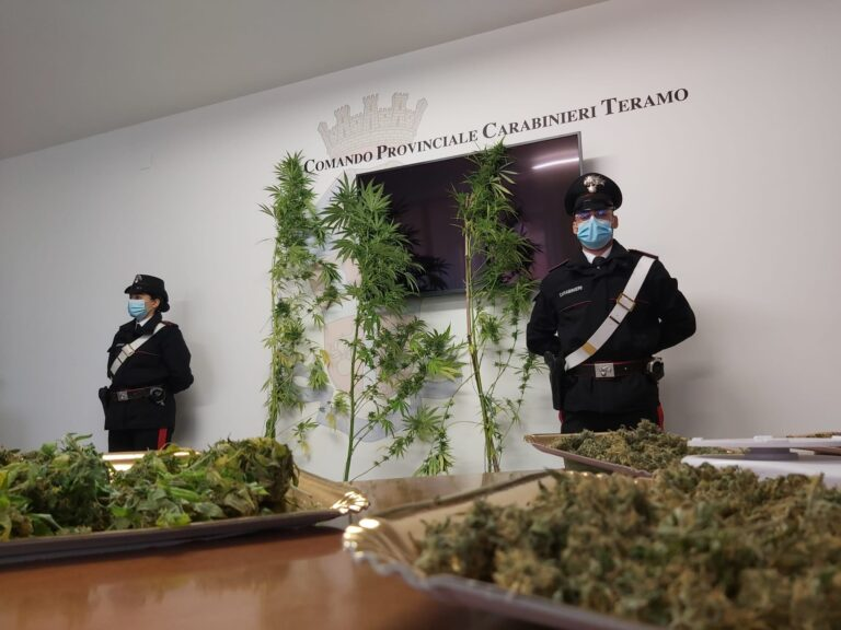 Piante di marijuana coltivate in un campo a Teramo: in arresto due uomini di Montorio FOTO