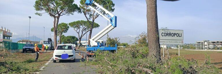 Corropoli, alberi sulla 259: ripresi i lavori di potatura e abbattimento
