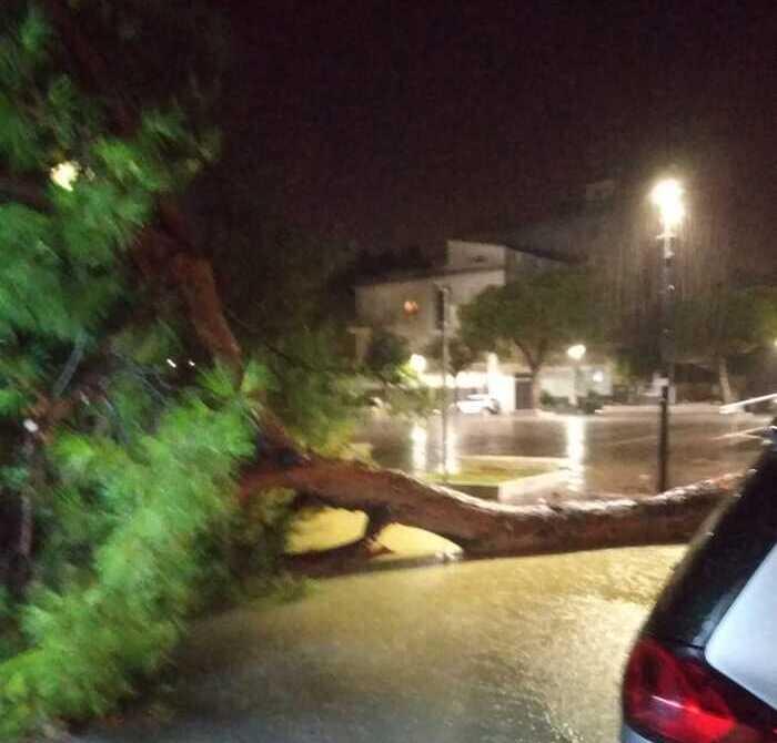 Maltempo, cade un grosso pino a Giulianova Lido